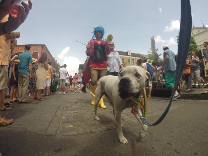 New Orleans Puppy